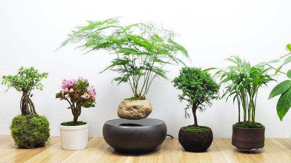 cây phong thủy để trong nhà