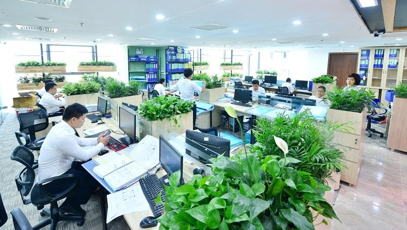 cây xanh cho văn phòng