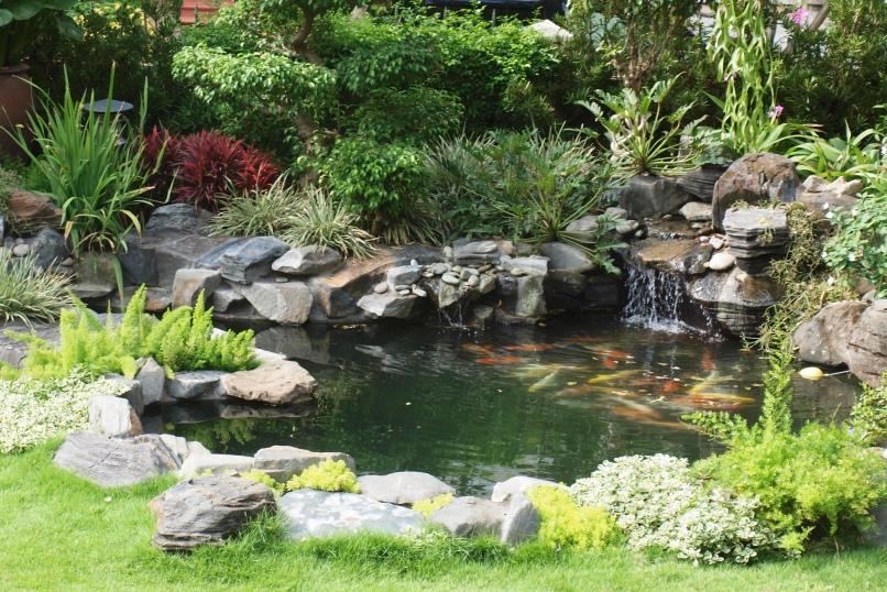 hồ cá koi sân vườn